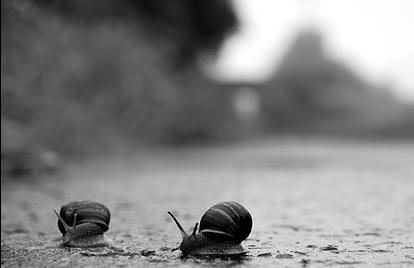 Bw_snails crop